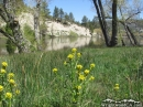 More flowers around Jackson Lake in the Spring. - Wrightwood CA Photos