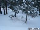 Small trees in the snow in Wrightwood - Wrightwood CA Photos