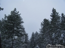 Pine Trees in the snow. - Wrightwood CA Photos