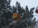 Bird in the tree after snow storm. - Wrightwood CA Photos