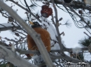 Bird in tree after snow storm. - Wrightwood CA Photos