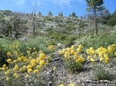 Flowers on the Big Pines Nature Trail - Wrightwood CA Photos