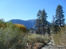 Looking toward Mt Baden Powell from Cabin Flat Campground in the fall - Wrightwood CA Photos