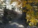 Blue Ridge Trail in the fall - Wrightwood CA Photos