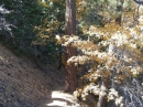 Wrightwood in the fall - Wrightwood CA Photos