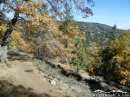Trees changing colors in the fall - Wrightwood CA Photos