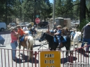 Pony Rides at Mountaineer Days 2011 - Wrightwood CA Photos