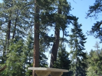 Picnic Table in front of trees in the Arch Picnic Area - Wrightwood CA Mountains