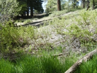 Creek that runs through Arch Picnic Area - Wrightwood CA Mountains